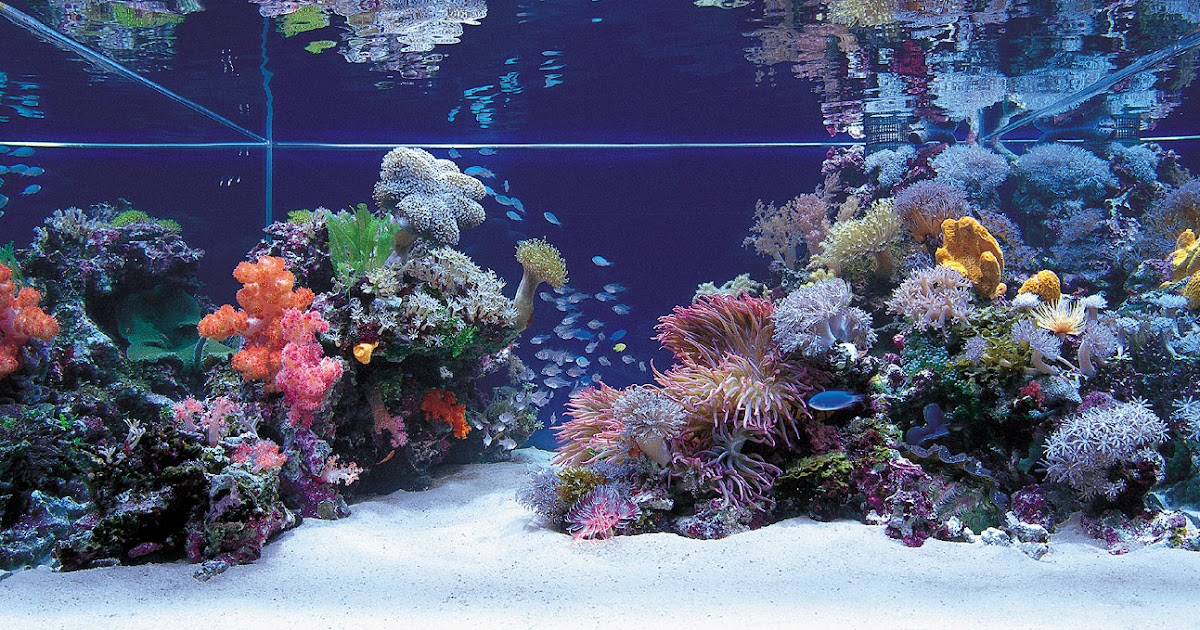 Dans Reef: Aquascaping your tank tips i found