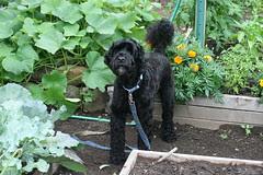 skippy in the garden 3
