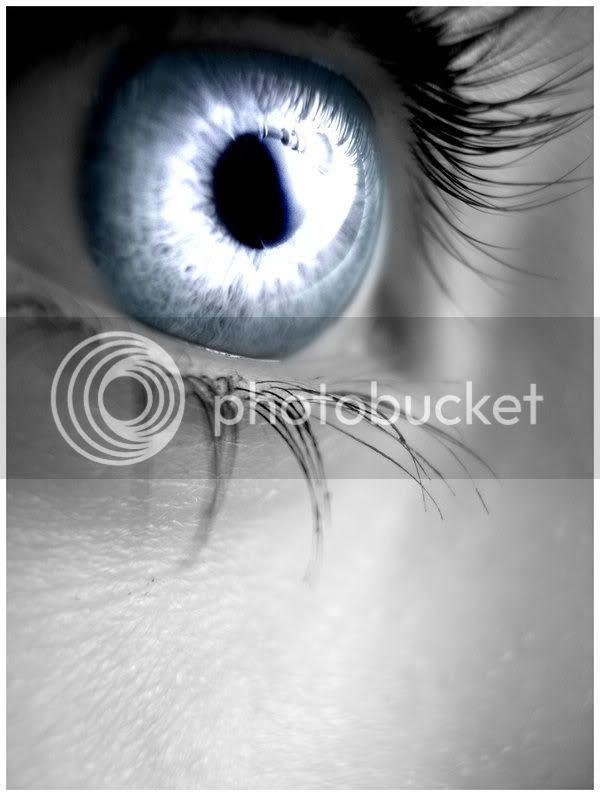 Silver_Eye.jpg Silver Eyes