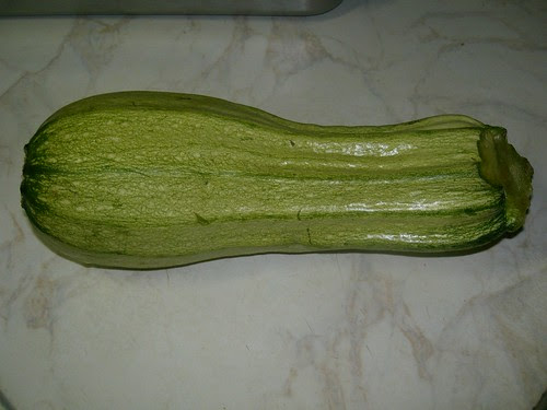 an oversized zucchini courgette