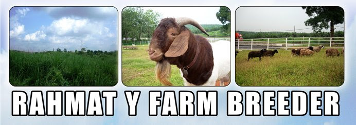 Rahmat Y Farm Breeder - Penternak Kambing Boer