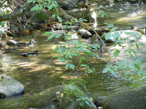 Lithia Park, Ashland, Oregon _ 6147