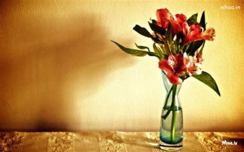 red flower pot hd wallpaper