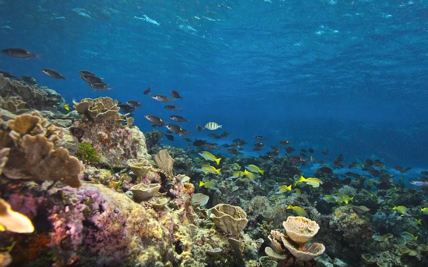 Parakseno.gr : coral 1 Ο μαγικός κόσμος του μεγάλου κοραλλιογενούς υφάλου