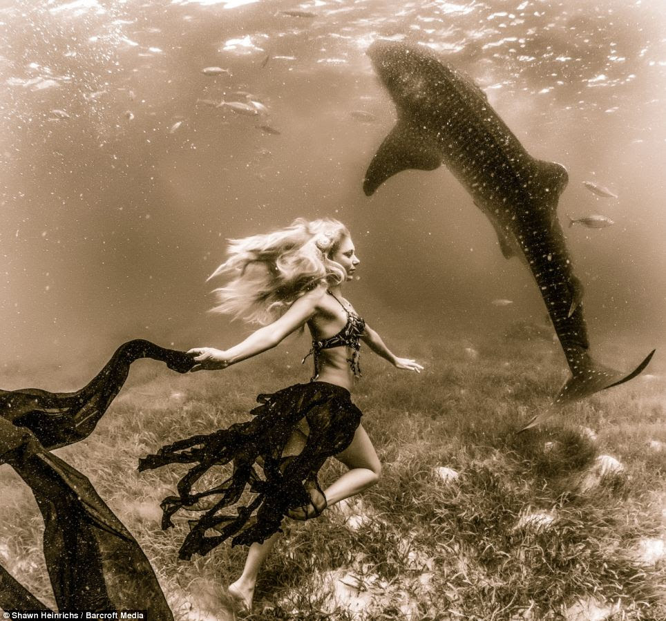 Link: 'People are immediately taken by the connection between these models and the sharks, the juxtaposition between these beautiful vulnerable women and these creatures of the deep,' said the photographer