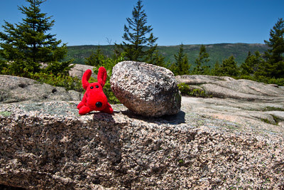 Rover in Acadia National Park