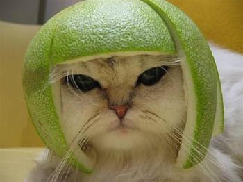 cat_helmet