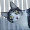 The Cat Portrait2