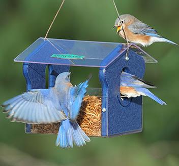 Classic Bluebird Feeder
