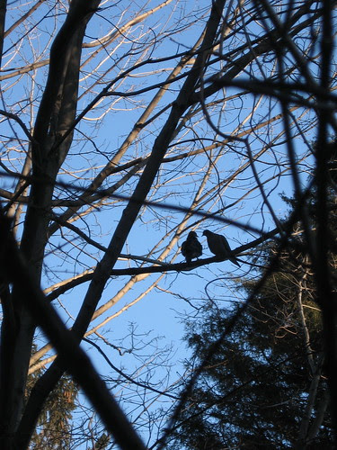birds chatting