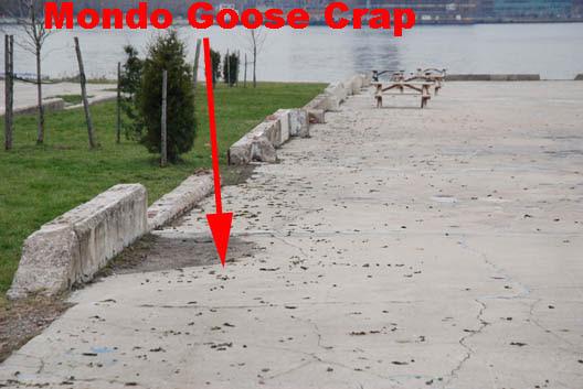 East River State Park Goose Crap