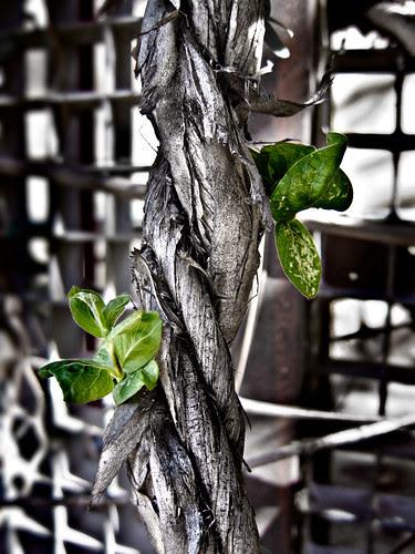 54/365 Brotes verdes