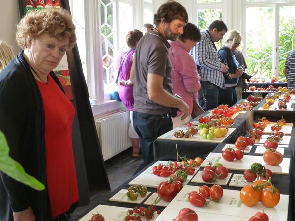 zicht op de tentoonsetlling met veelkleurige tomaten op witte ondergrond, de bezoekers bestuderen de verschillen