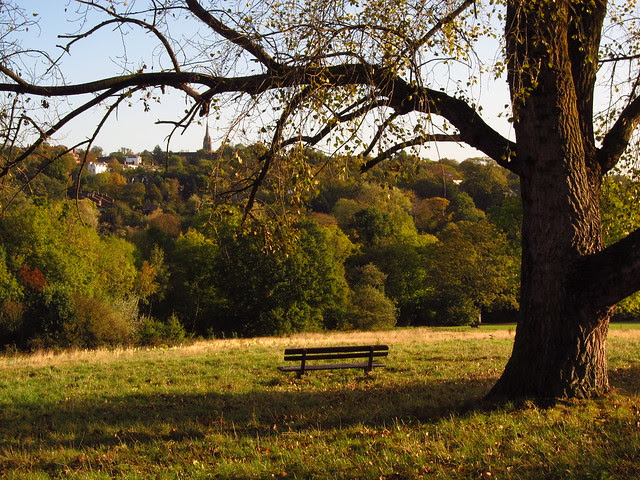 Tree and Bench on the Little Tumulus Field