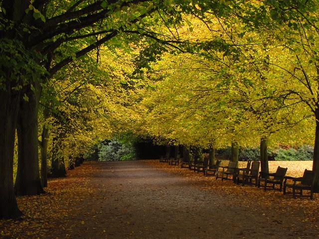 The Kenwood Lime Avenue