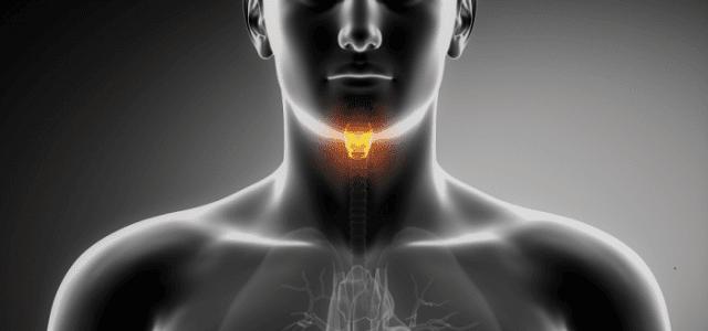 http://i0.wp.com/consejosdelconejo.com/wp-content/uploads/2015/08/tiroide-e1439613651118.png?resize=640%2C300