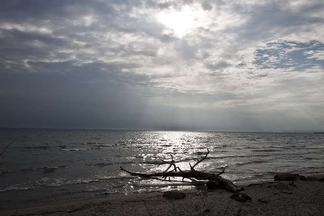 driftwood and rays