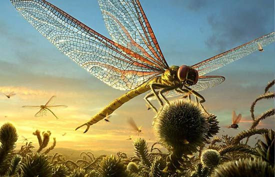 Meganeura was an extinct insect from the Carboniferous period approximately 300 million years ago with wingspans of more than 75 cm (2.5 ft) wide