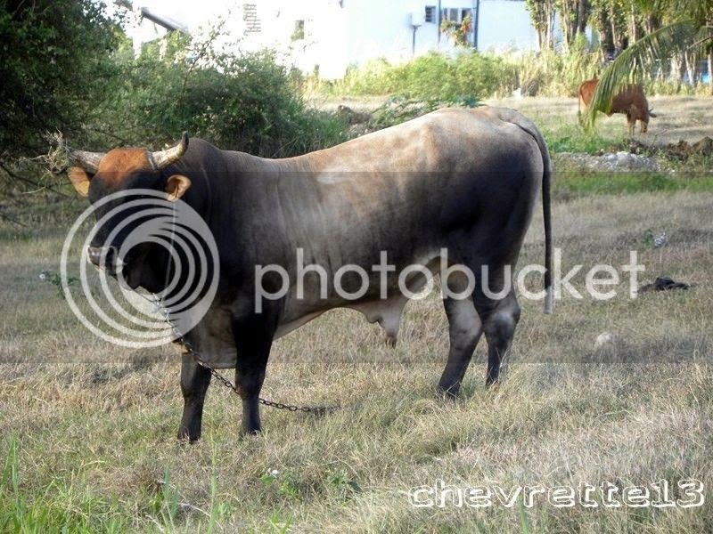 http://i1252.photobucket.com/albums/hh578/chevrette13/Guadeloupe/DSCN7107Copier_zps0037ba82.jpg