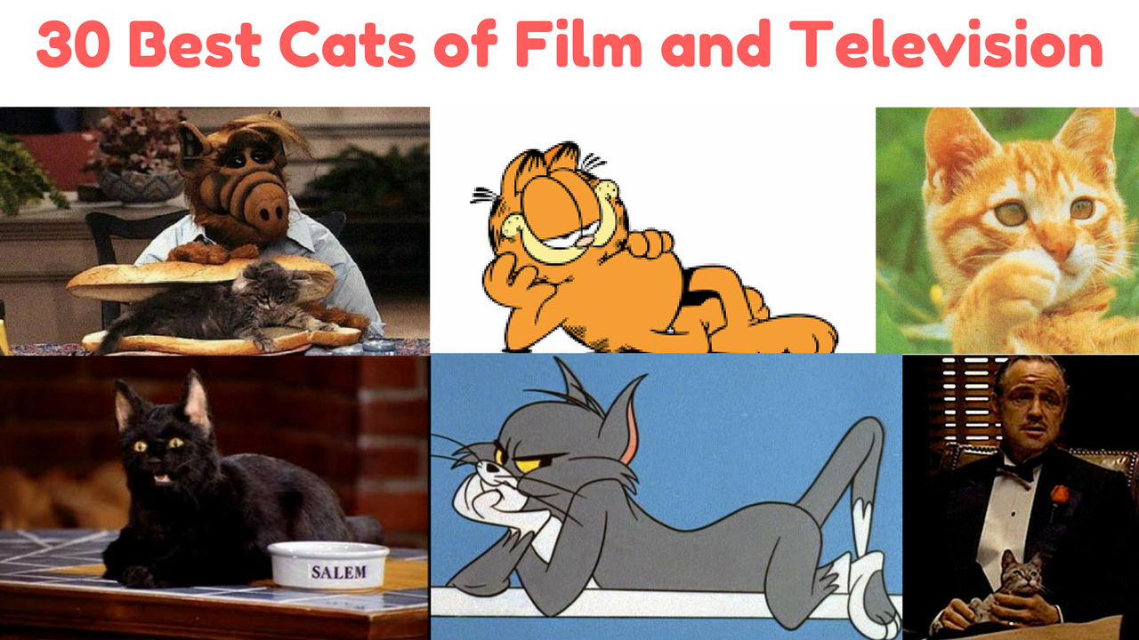 30 Best Cats of Film and Television Series TV