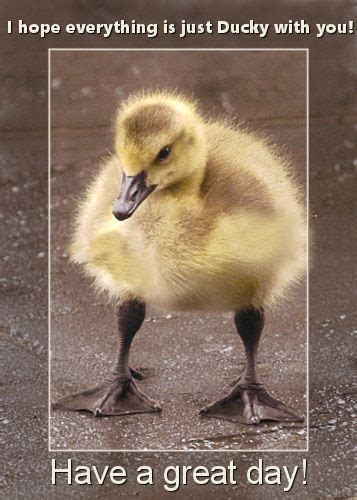 Little Duck Says Have A Great Day. Free Have a Great Day