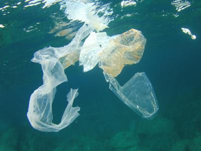 Risultati immagini per WWF: 95% DEI RIFIUTI MARINI È PLASTICA