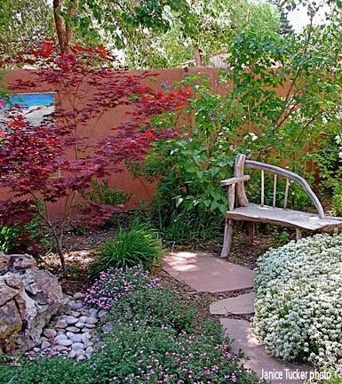 May Redleaf Japanese Maple Acer Palmatum Atropurpureum Santa