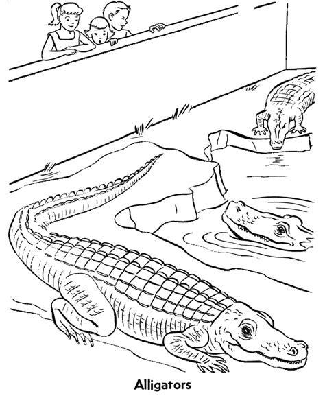 zoo reptile coloring page alligators exhibit coloring