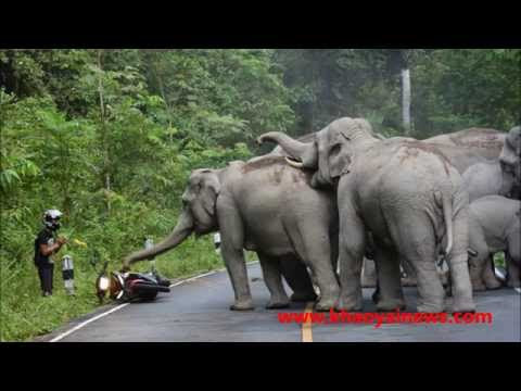 Man Attacked By Elephants In Thailand