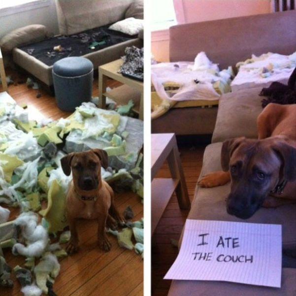 Sweet Dogs Admit Their Secrets in Public