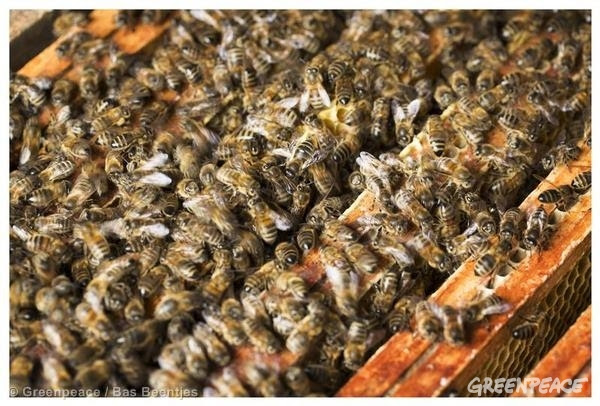 Las abejas de la UE están contaminadas
