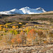 Eastern Sierra Fall Colors 2012