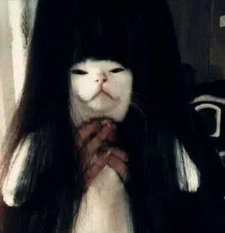Download 89+ Gambar Hantu Kucing Lucu Paling Baru Gratis