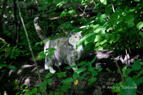 Possum Takes a Hike-5.jpg