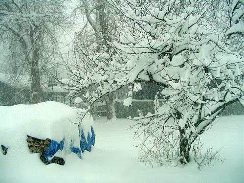 December 9 snow - backyard