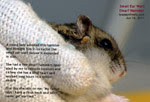 Be Kind to dwarf hamsters. Get your vet to excise warts when they are small. It is cheaper too. Toa Payoh Vets