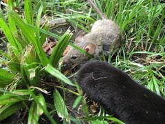 Brave/Dumb Mouse