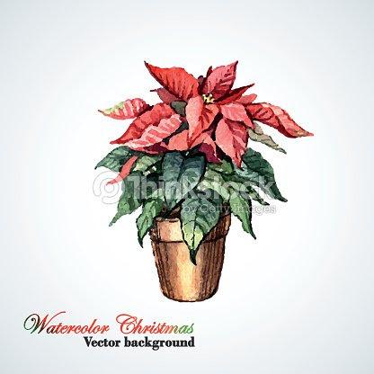 Navidad Flor De Nochebuena De Flores Acuarela Arte Vectorial