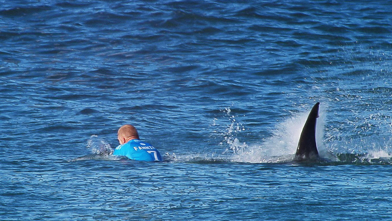 Mick Fanning vs. shark