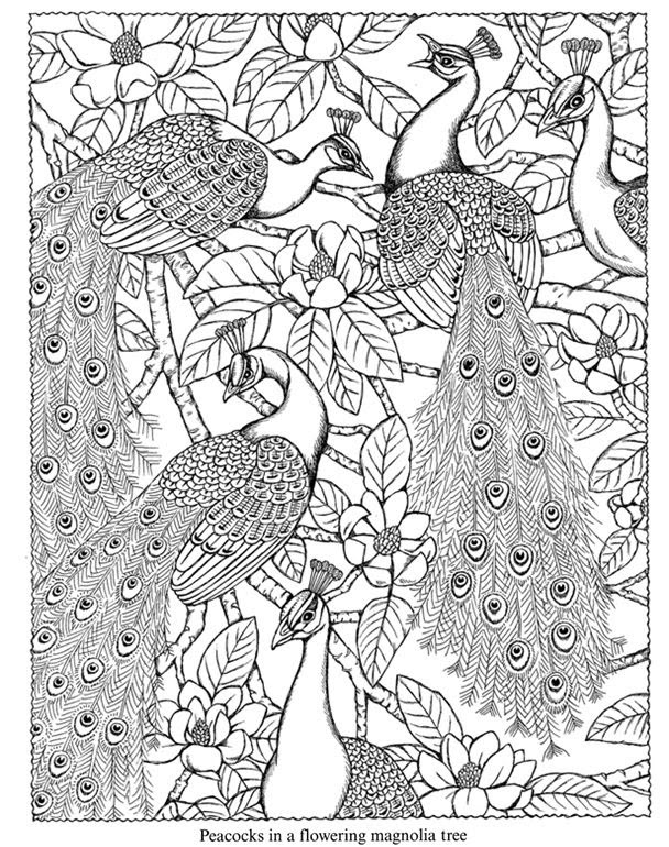 4300 Top Colouring Pages Garden Birds , Free HD Download