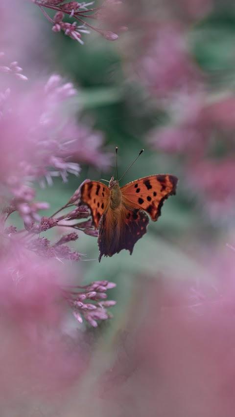 خلفية للطبيعة مع فراشة برتقالية اللون وبدقة عالية hd