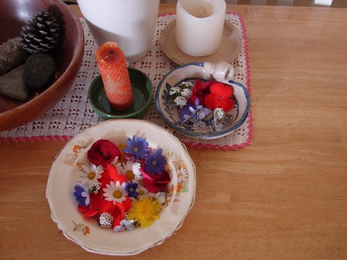 flowers collected