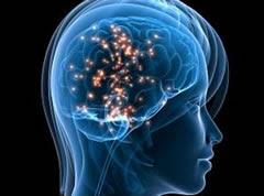 El sexo y el cerebro