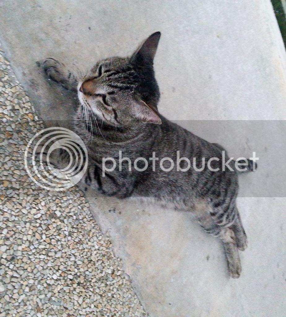 photo CatJRT14Aug11.jpg