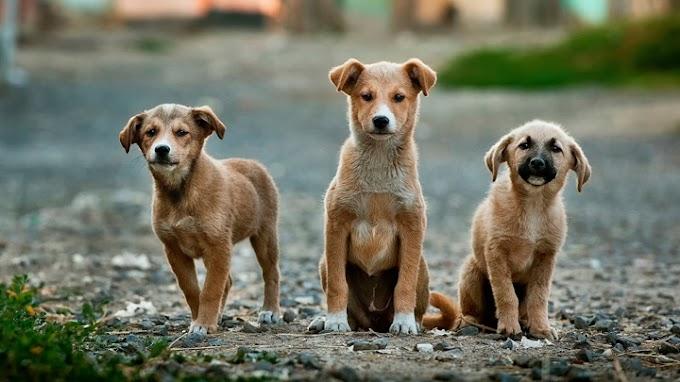 ¿Cuánto cuesta el seguro de un perro?