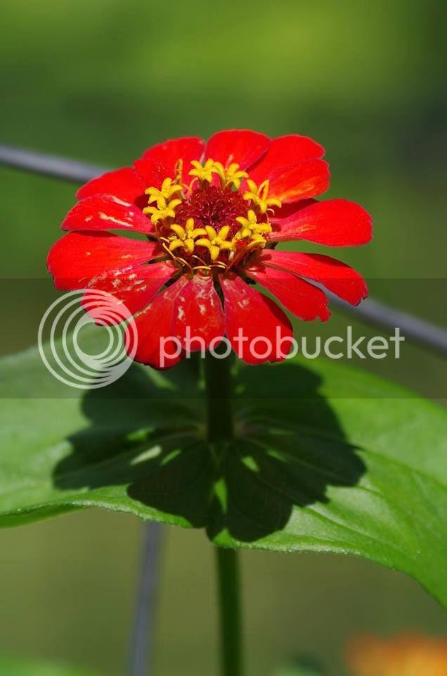 photo flowerShadowPrieto.jpg