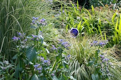 borage and grasses