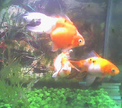 friday fishie blogging