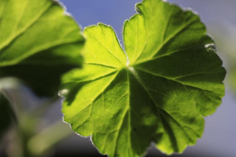 plant leaves in sunlight