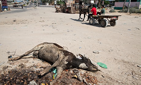 Dead cow and rotting vegetables at the roadside in Gaza